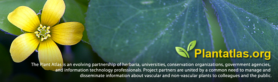 The Plant Atlas is an evolving partnership of herbaria, universities, conservation organizations, government agencies, and information technology professionals. Project partners are united by a common need to manage and disseminate information about vascular and non-vascular plants to colleagues and the public.